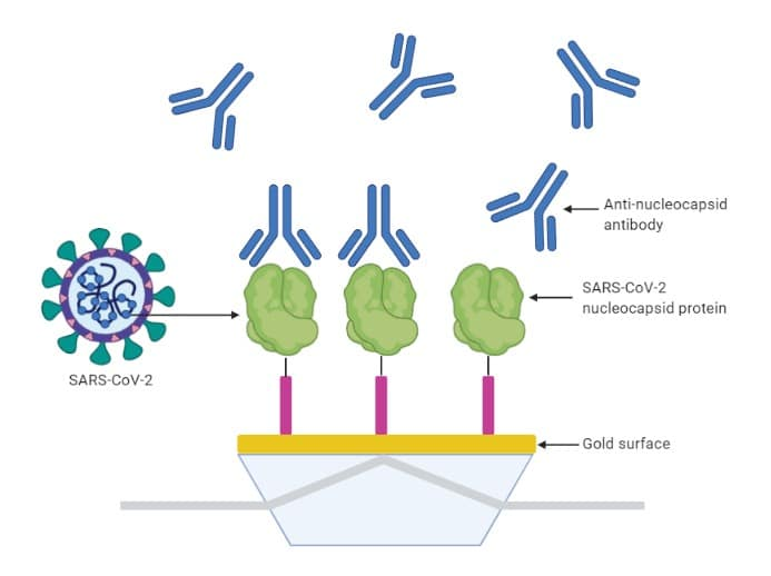 Rapid quality control of antibodies using Affinité's simple P4SPR