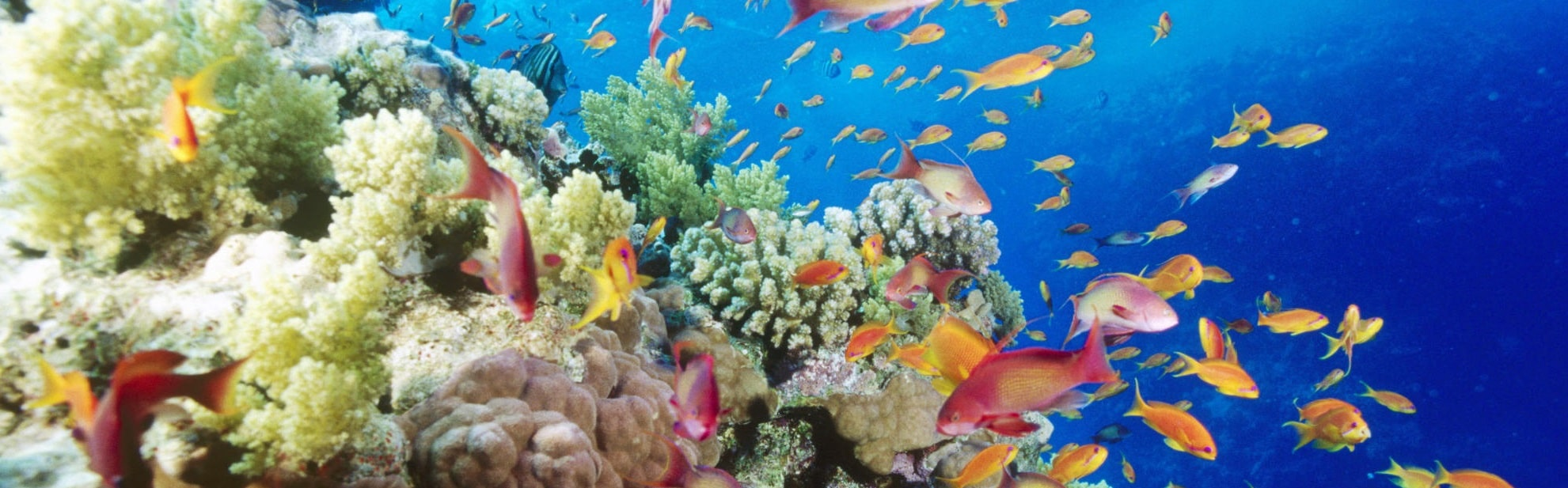 Particle Analysis in Marine Biology